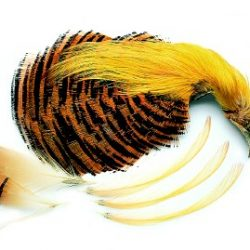 Golden Pheasant Complete Head Natural