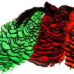 Amherst Pheasant Neck