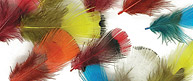 Pheasant Neck Feathers