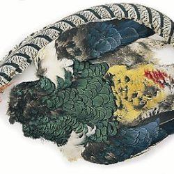 Amherst Pheasant Body