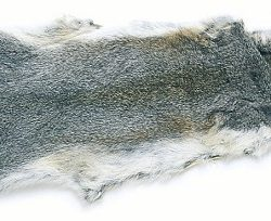 Grey Squirrel Skin