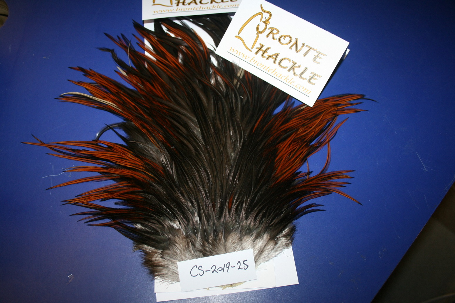Bronte Hackle Cock Saddles               cs-2019-25