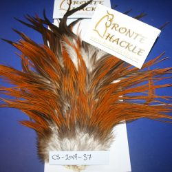 Bronte Hackle Cock Saddles               cs-2019-37