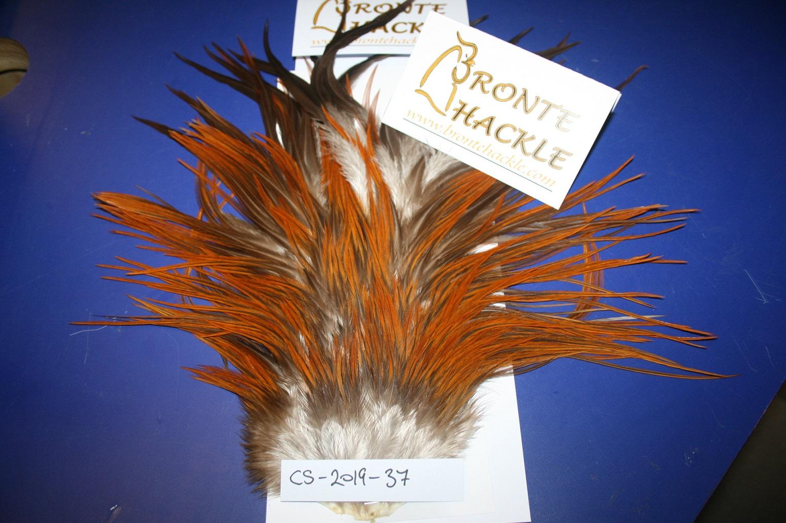 Bronte Hackle Cock Saddles               cs-2019-37